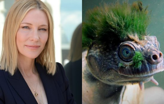 Cate Blanchett voices a Mary River Turtle to support the Wilderness Society